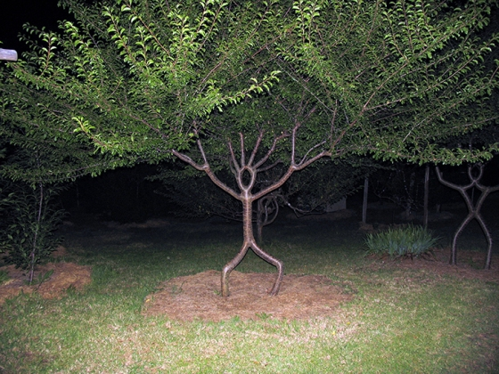 Person-tree.jpg